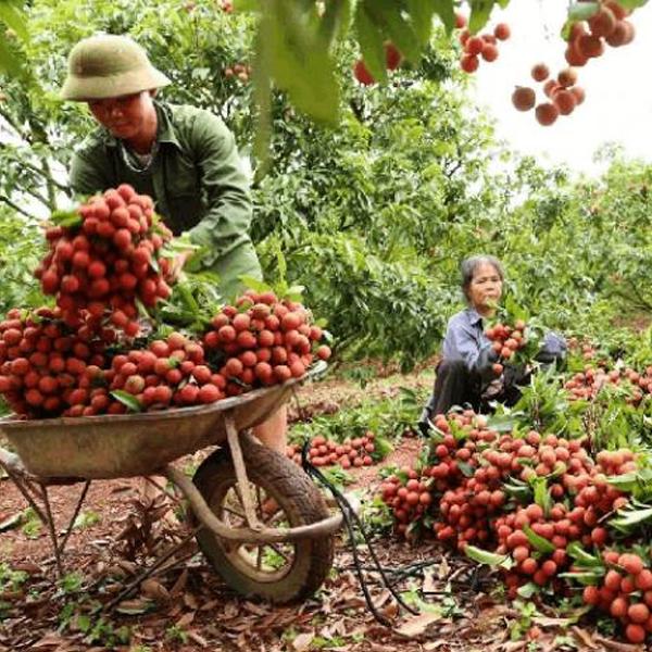 Thí điểm lập sàn giao dịch tiêu thụ nông sản